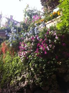 Capri, Italy, Flowers